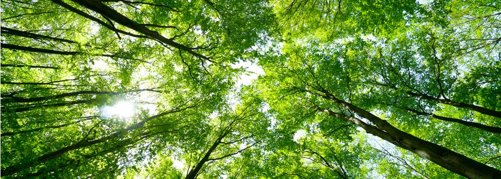 木言葉とは?素敵な木言葉と共に木工品をプレゼントしませんか