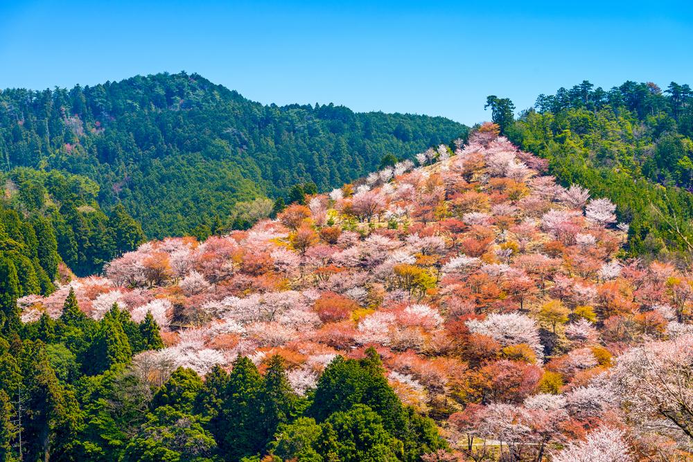4月の誕生木、山桜の木言葉は「微笑」です。